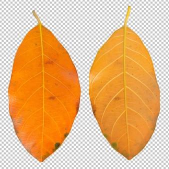 Droge bladeren in de herfst geïsoleerd