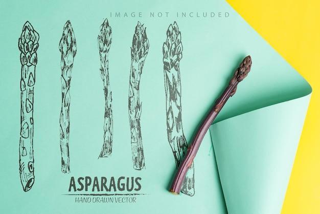 Een speer van verse natuurlijke biologische asperges bud op een duotoon golfoppervlak met kopie ruimte concept van het fokken van nieuwe soorten aspergegroenten