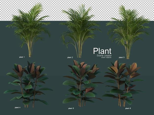 Een verscheidenheid aan decoratieve bomen