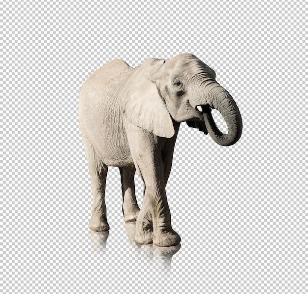 Elefante realista