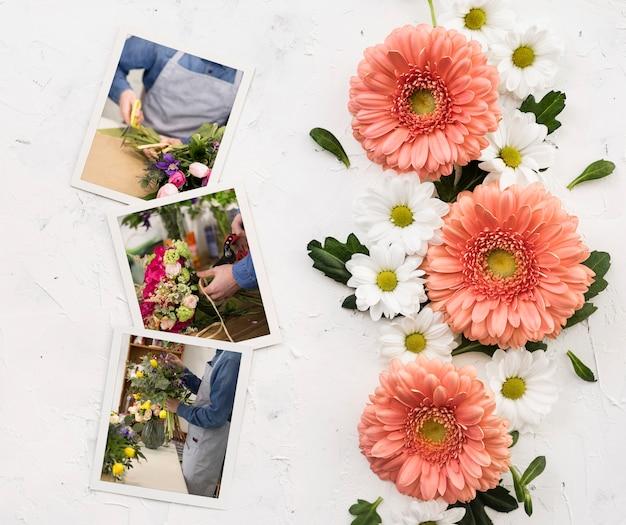 Endecha plana de manzanilla primaveral y margaritas con fotos