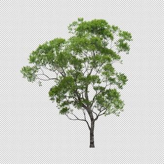 Eucalipto con fondo aislado, árbol 3d render