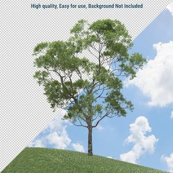 Eucalyptusboom geïsoleerd
