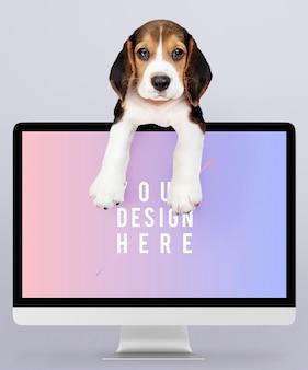 Filhote de cachorro adorável beagle com um modelo de monitor de computador