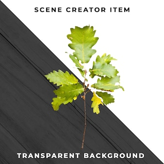 Foglia di legno trasparente psd