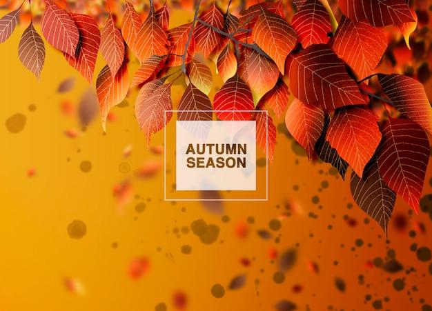 Fondo de temporada de otoño, hojas y sombras.