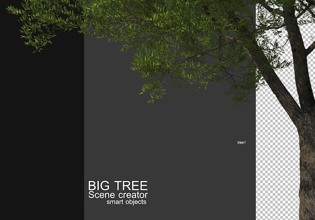 Geef een voorgrondweergave van een grote boom weer