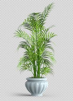 Geïsoleerde plant in pot