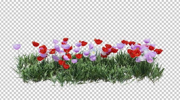 Geïsoleerde struik met prachtige bloemen