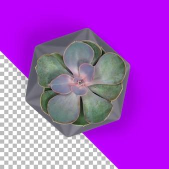 Geïsoleerde succulent in een pot