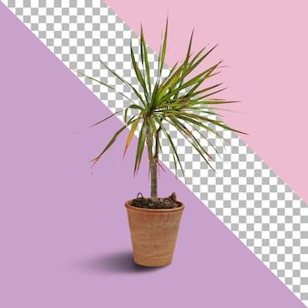 Geïsoleerde verse plant op bruine pot