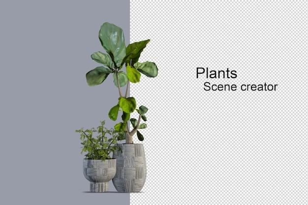 Geïsoleerde verse plant op houten mand