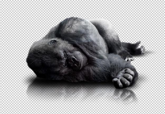 Gorila realista