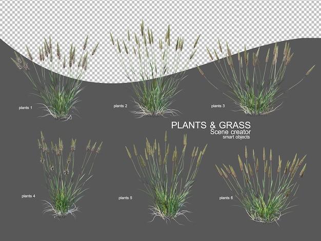 Grassen in verschillende maten en soorten