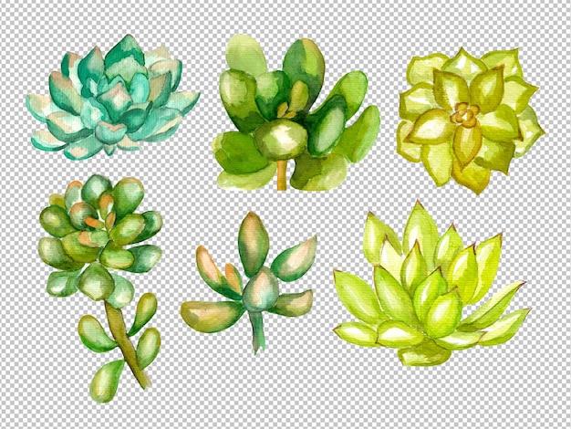 Groen sappige elementen aquarel illustratie