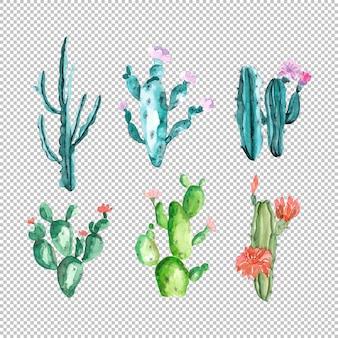 Groene cactus met roze bloemen in aquarelcollectie
