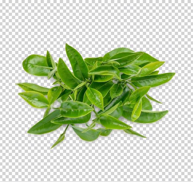 Groene theeblaadjes geïsoleerd premium psd