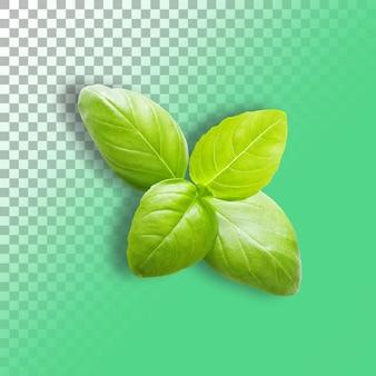 Groene verse basilicum op transparante achtergrond close up.