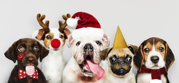 Groep puppy die kerstmiskostuums dragen om kerstmis te vieren