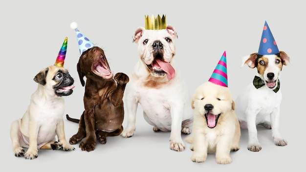Groep puppy die nieuw jaar samen viert
