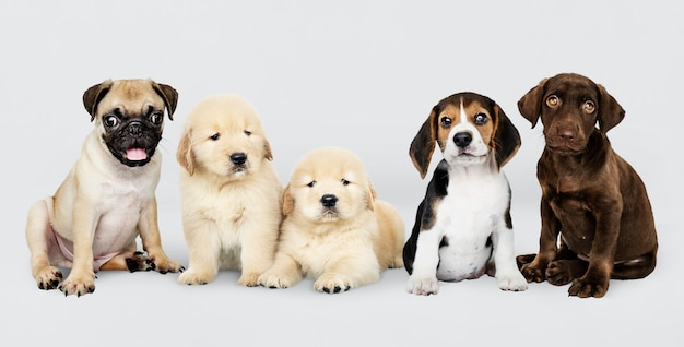 Groepsportret van vijf schattige puppy's