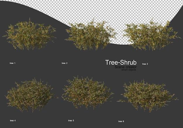Grote verscheidenheid aan bomen en struiken rendering