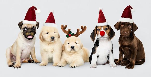 Gruppo di cuccioli che indossano cappelli natalizi per festeggiare il natale
