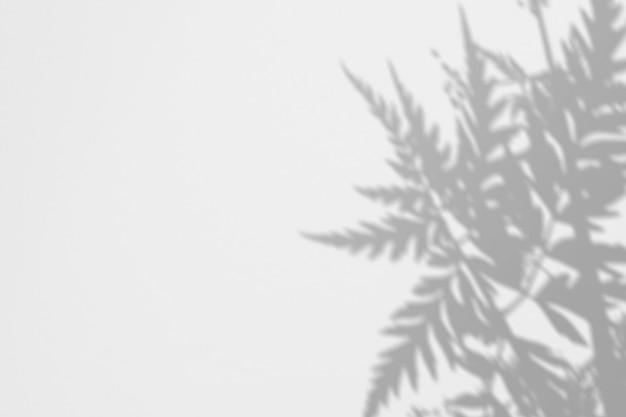 Helecho de sombras en una pared blanca