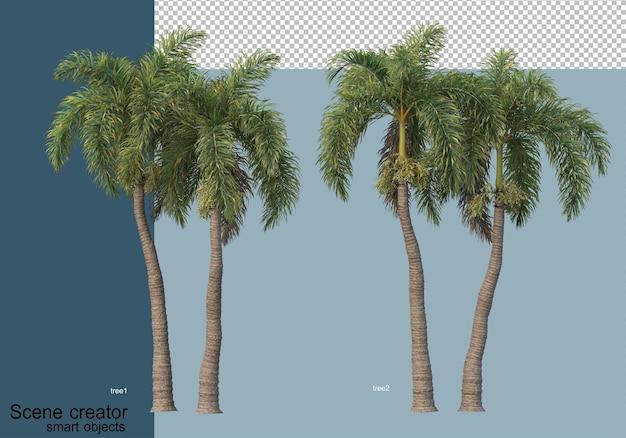 Hermosa representación 3d de árboles aislados
