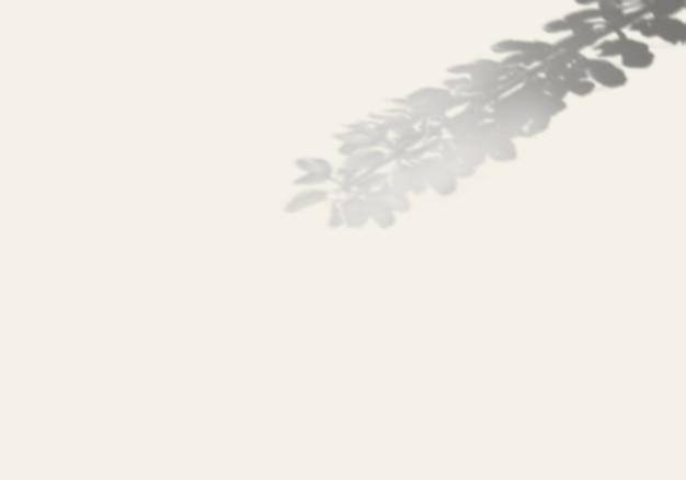 Hij schaduw van een exotische plant op een witte muur.