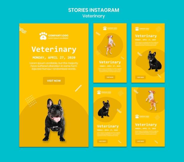 Historias de instagram veterinarias