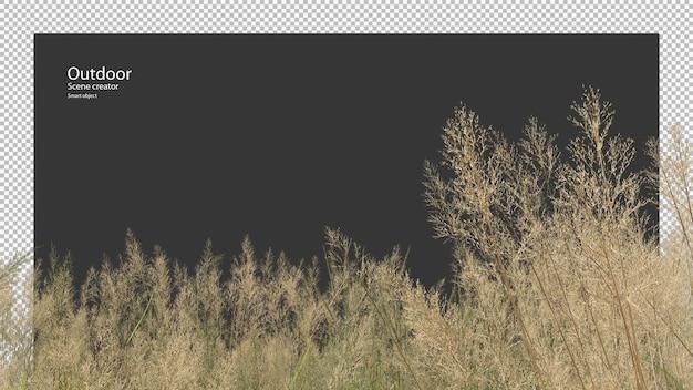 Hoge grasweide in 3d-rendering