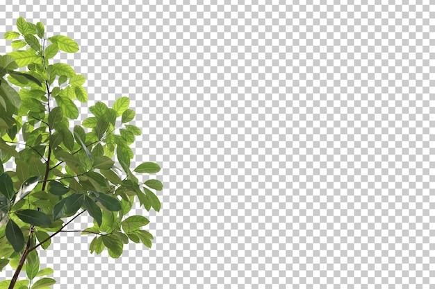 Hojas de árboles tropicales y primer plano de rama aislado