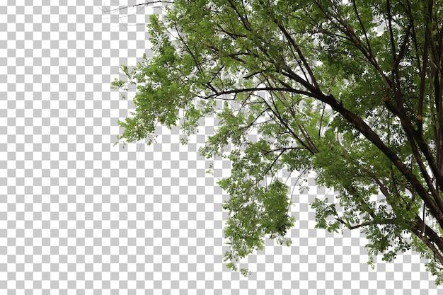 Hojas de árboles tropicales y primer plano de rama