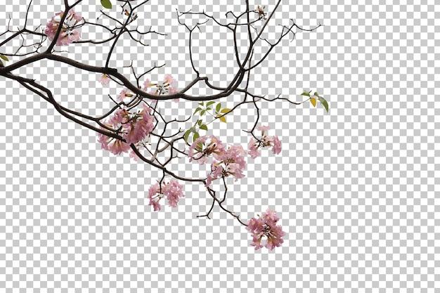 Hojas de flores de árboles tropicales y primer plano de rama aislado