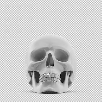 Il cranio isometrico 3d isolato rende