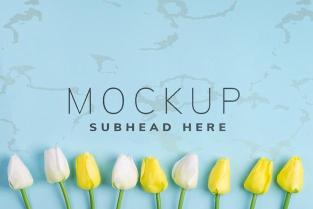 Il tulipano stupefacente della molla fiorisce su fondo blu, disposizione piana con lo spazio della copia