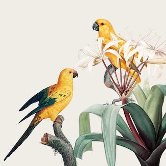 Illustrazione tropicale di ara