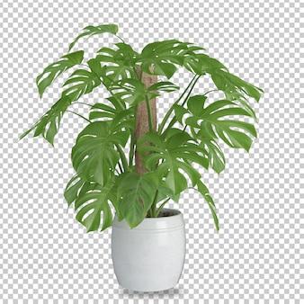 Isometrische plant in 3d-rendering