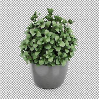 Isometrische plant