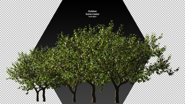 Kersenboom uitknippad kersenboom geïsoleerd