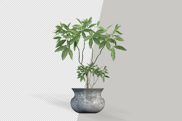 Kleine kamerplant in de maker van de scène van de kubuspot