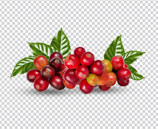 Koffiebonen met geïsoleerde bladeren premium psd