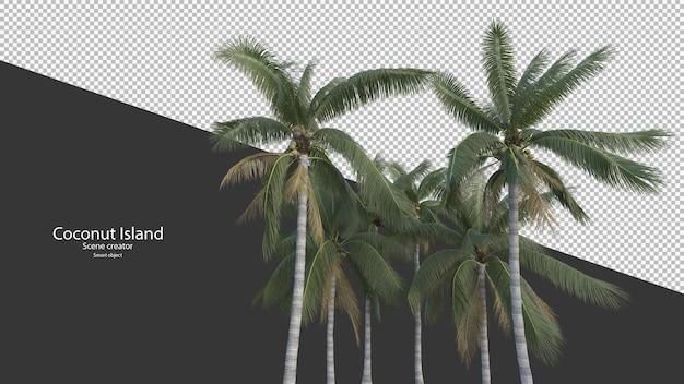 Kokospalm in 3d-rendering geïsoleerd