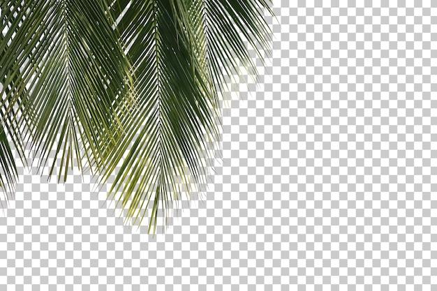 Kokospalm laat voorgrond geïsoleerd