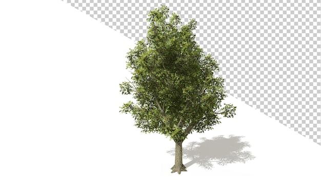 Krab apple tree met geïsoleerde boom 3d render