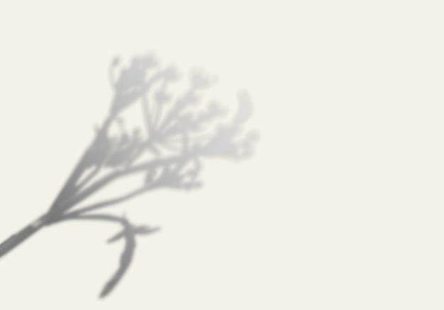 L'ombra di un albero su un muro bianco.
