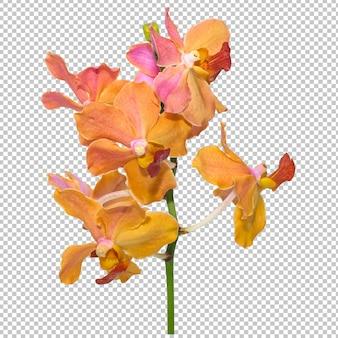 L'orchidea rosa-arancio del mazzo fiorisce su trasparenza isolata. floreale.