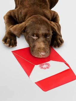 Labrador retriever adorable durmiendo en la parte superior de una maqueta de carta de amor