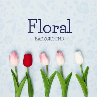 Lay flat de tulipanes de primavera